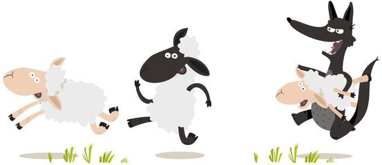 Grand méchant Loup poursuivant des moutons