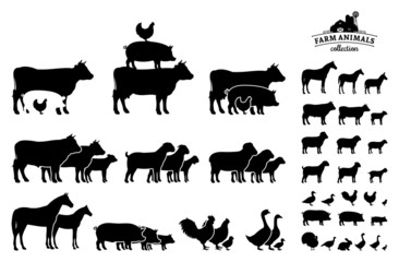 Vector Farm Animals Collection Isolated on White Wall mural