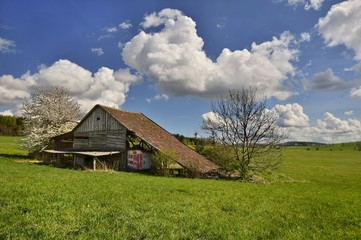 Spring sunny day on pasture with old barn