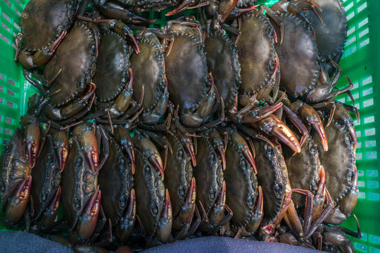 Soft-shelled crabs in green basket