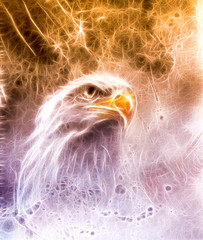 Symbol of American Freedom, wild bald eagle on abstract backgrou
