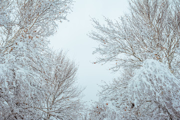 New Year tree in winter forest. Beautiful winter landscape with