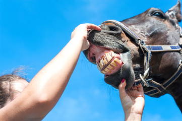 Owner checking horse teeth. Multicolored outdoors image.