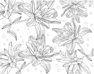 contour monochrome drawing of lilies on a white background