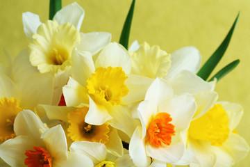 Fresh narcissus flowers, closeup