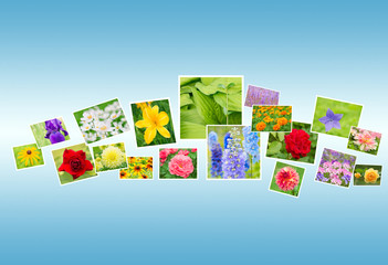 Photos of Flowers on a Blue Background