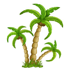 Illustration of the palm trees on a white background