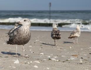 Птицы на пляже