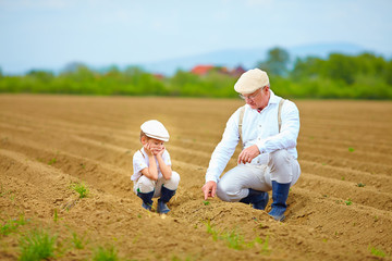 farmers, family on their land, checking plant growth