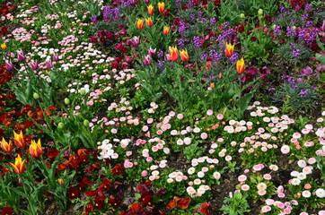Frühlingsblumenmix