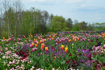 Frühlingslandschaft mit Blumenmeer