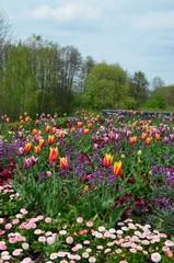 Frühlingslandschaft mit vielen Blumen