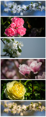 Collection of flowers banners-roses,magnolia and cherry flowers.