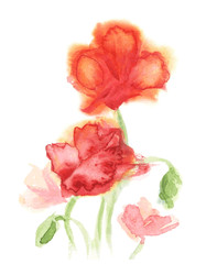Watercolor red poppies. Vector.