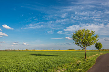 Beautiful farm landscape in late spring in Germany