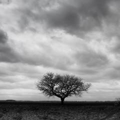 arbre cerisier ciel sombre