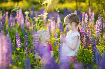 Two cute little sisters in blooming lupine field