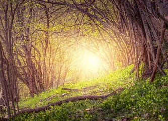 Old mystical forest in the morning.