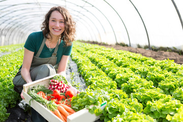 Young attractive woman harvesting vegetable in a greenhouse