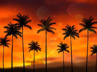 Silhouette of coconut tree when of sunset