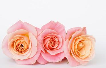 ピンクの3本のバラ