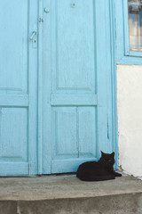 cat lying near blue door