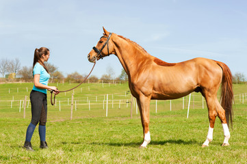 Young woman riding trainer holding  purebred chestnut horse.