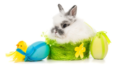 rabbit  with colored eggs