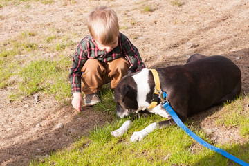 toddler boy playing with a dog