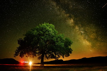lonely tree on field under the night sky