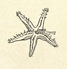 Starfish consuming a fish