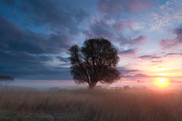 misty spring sunrise in countryside