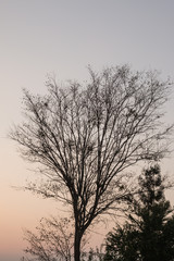 Leafless tree against sunlight on sky background