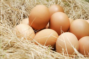A fresh egg has a background as straw hay.