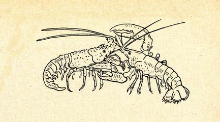 Lobster Bisque Target | Lobster House