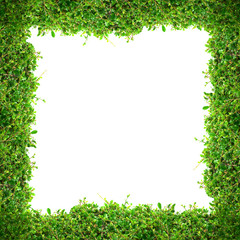 Green bush frame on a white background