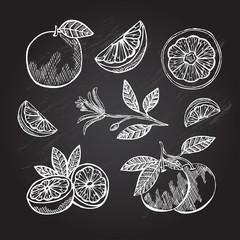hand drawn grapefruits