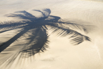 Palm Tree Shadows in the Sand of Tropical Beach