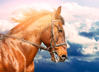 Wall Mural - Portrait of bay horse in the background of the cloudy sky