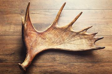 Moose antler on wooden background