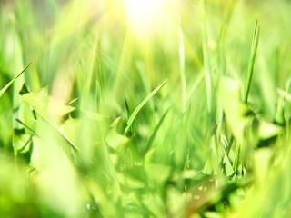 Sun rays and green grass. Shallow DOF