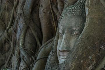 Buddha Head in the tree at Ayutthaya Historicak Park