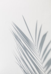 Poster Palmier shadow of palm leaves