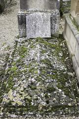 Tomb full of moss