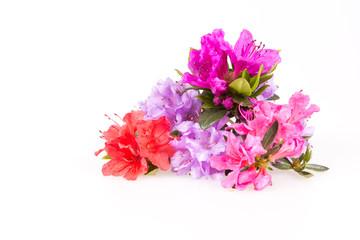 Rhododendron bloemen samenstelling op een witte achtergrond