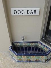 Dog Bar - Palm Beach Florida