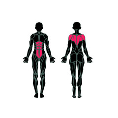 Polygonal anatomy of female muscular system, exercise and muscle