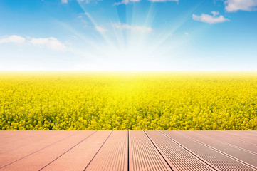 Wall Mural - Wooden with Field of yellow flowers and blue sky.