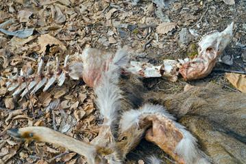Spoils of deer 13