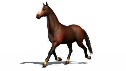 brown horse trots isolated on white background